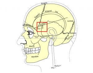 Pterion
